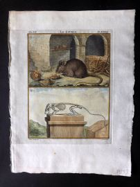 Buffon 1766 Antique Hand Col Print. Mouse & Skeleton 07-39
